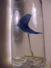 VODKA WITH BLUE GLASS  FISH INSIDE